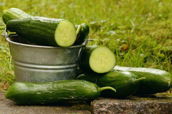 cucumbers-1588945_1920